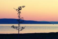 Μόνο Στοκ φωτογραφίες με δικαίωμα ελεύθερης χρήσης