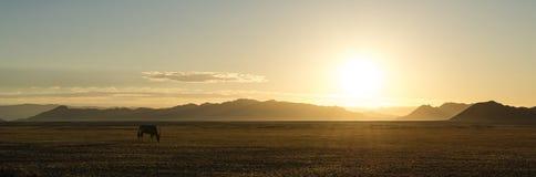 Μόνο Oryx στην έρημο (Ναμίμπια) στοκ εικόνες