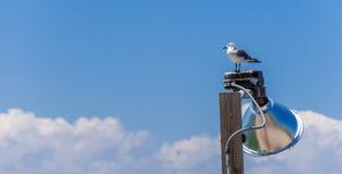 Μόνο Seagul Στοκ φωτογραφία με δικαίωμα ελεύθερης χρήσης