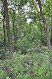 Μόντρεαλ, στις 27 Ιουνίου: Πάρκο του υποστηρίγματος βασιλικό από το Μόντρεαλ στην επαρχία του Κεμπέκ Στοκ Εικόνα