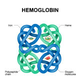 Μόριο αιμογλοβίνης διανυσματική απεικόνιση