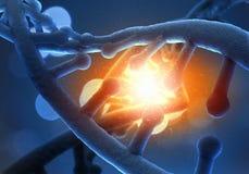 Μόριο DNA Στοκ φωτογραφία με δικαίωμα ελεύθερης χρήσης