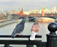 Μόσχα, άνοιξη, περιστέρια, αγάπη στοκ φωτογραφία με δικαίωμα ελεύθερης χρήσης