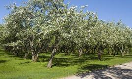 Μόσχα, κήπος μήλων Στοκ φωτογραφία με δικαίωμα ελεύθερης χρήσης
