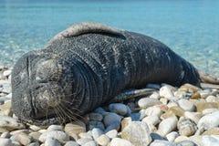 Μόσχος θάλασσας στοκ φωτογραφίες με δικαίωμα ελεύθερης χρήσης