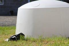 Μόσχος Hutch για τη βιομηχανία μοσχαρίσιων κρεάτων Στοκ Φωτογραφίες