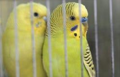 Μόδα της Pet στοκ φωτογραφία με δικαίωμα ελεύθερης χρήσης