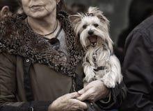 Μόδα 009 της Pet Στοκ Φωτογραφίες