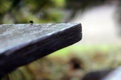 Μύγα έτοιμη να πηδήσει στο διάστημα στοκ φωτογραφία με δικαίωμα ελεύθερης χρήσης