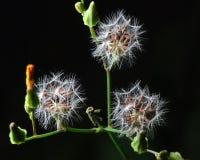 μύγα έτοιμη Στοκ φωτογραφία με δικαίωμα ελεύθερης χρήσης