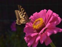 Μύγα, λίγη πεταλούδα Στοκ εικόνες με δικαίωμα ελεύθερης χρήσης