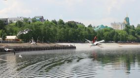 Μύγα γλάρων πέρα από το νερό του ποταμού κοντά στην αποβάθρα απόθεμα βίντεο