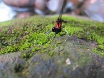 Μύγα δράκων στοκ εικόνες