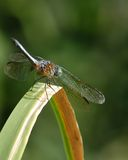 μύγα δράκων Στοκ εικόνα με δικαίωμα ελεύθερης χρήσης