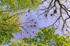 Μύγα κοράκων πέρα από τις φωλιές στοκ εικόνα με δικαίωμα ελεύθερης χρήσης