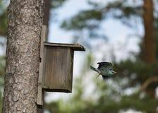 Μύγα κυλίνδρων μακριά Στοκ εικόνες με δικαίωμα ελεύθερης χρήσης
