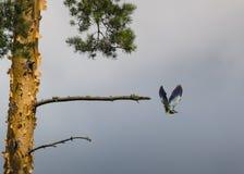 Μύγα κυλίνδρων μακρυά από το δέντρο στοκ φωτογραφία με δικαίωμα ελεύθερης χρήσης