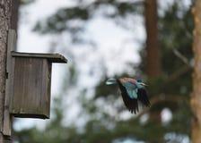 Μύγα κυλίνδρων μακρυά από το κλουβί πουλιών του Στοκ φωτογραφίες με δικαίωμα ελεύθερης χρήσης