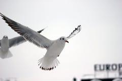 Μύγα μακριά Στοκ εικόνες με δικαίωμα ελεύθερης χρήσης