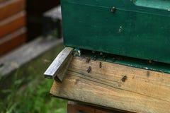 Μύγα μελισσών έξω και μύγα στη μύγα κυψελών στοκ φωτογραφία με δικαίωμα ελεύθερης χρήσης