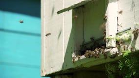 Μύγα μελισσών στην κυψέλη και μύγα από την κυψέλη σε σε αργή κίνηση φιλμ μικρού μήκους