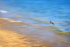 Μύγα πέρα από τη θάλασσα Στοκ εικόνα με δικαίωμα ελεύθερης χρήσης