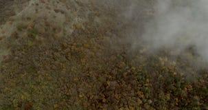 Μύγα πέρα από το δάσος βουνών με την υδρονέφωση απόθεμα βίντεο