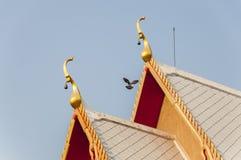 Μύγα περιστεριών κοντά στην ταϊλανδική στέγη ναών με το σαφή μπλε ουρανό Στοκ εικόνα με δικαίωμα ελεύθερης χρήσης