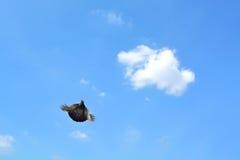 Μύγα περιστεριών υψηλή στον ουρανό Στοκ εικόνα με δικαίωμα ελεύθερης χρήσης