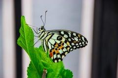 Μύγα πεταλούδων στον κήπο Στοκ φωτογραφία με δικαίωμα ελεύθερης χρήσης