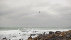 Μύγα πουλιών μακριά ενάντια στο αργό MO θάλασσας απόθεμα βίντεο