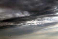 Μύγα πουλιών σε έναν θυελλώδη ουρανό σκοτεινός θυελλώδης ουρανός με τα σύννεφα στοκ φωτογραφία με δικαίωμα ελεύθερης χρήσης