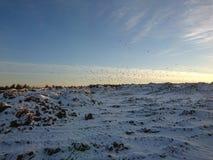 Μύγα πουλιών πέρα από το χιονώδες βουνό Στοκ εικόνες με δικαίωμα ελεύθερης χρήσης