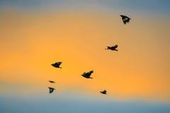 Μύγα πουλιών πίσω στο σπίτι Στοκ Φωτογραφία