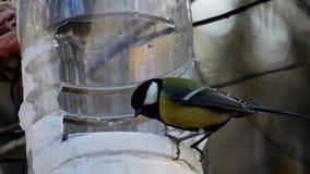 Μύγα πουλιών στον τροφοδότη πουλιών και μύγα μακριά σε σε αργή κίνηση απόθεμα βίντεο