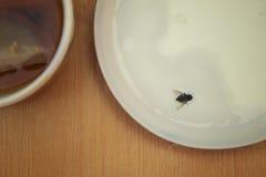 Μύγα που προσγειώνεται στα τρόφιμα Στοκ Εικόνες