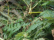 Μύγα δράκων στοκ φωτογραφία με δικαίωμα ελεύθερης χρήσης