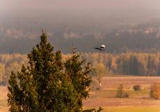 Μύγα σαράντα από fir-tree την κορυφή στοκ φωτογραφία