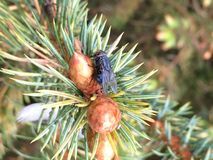 Μύγα σε έναν κλάδο στοκ φωτογραφία με δικαίωμα ελεύθερης χρήσης