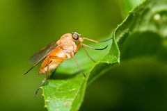 Μύγα σε μια πράσινη ανασκόπηση Στοκ φωτογραφία με δικαίωμα ελεύθερης χρήσης