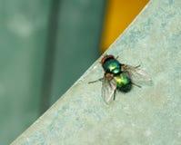 Μύγα στην άκρη Στοκ Φωτογραφία
