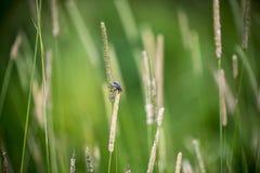 Μύγα στη χλόη Στοκ φωτογραφία με δικαίωμα ελεύθερης χρήσης