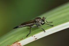 Μύγα στον κήπο Στοκ φωτογραφία με δικαίωμα ελεύθερης χρήσης