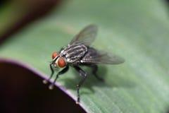Μύγα στον κήπο Στοκ φωτογραφίες με δικαίωμα ελεύθερης χρήσης