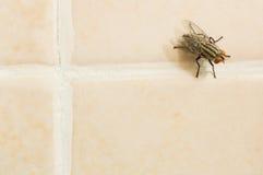 Μύγα στο κίτρινο πάτωμα κεραμιδιών Στοκ Φωτογραφίες