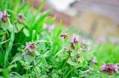 Μύγα στο λουλούδι Στοκ εικόνα με δικαίωμα ελεύθερης χρήσης