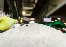Μύγα στο σιτάρι στοκ φωτογραφίες