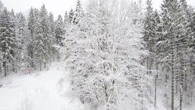 Μύγα στο χειμερινό ξύλο απόθεμα βίντεο