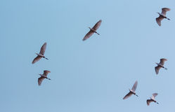 Μύγα στο όνειρο Στοκ Φωτογραφίες