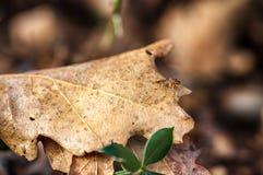 Μύγα τρουφών στην Προβηγκία, Γαλλία Στοκ εικόνες με δικαίωμα ελεύθερης χρήσης